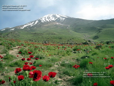 Damavand Mountain in Spring